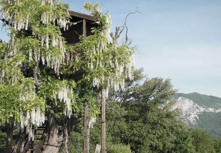 albero-fiorito-casa