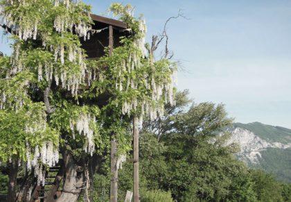1-albero-fiorito-casa