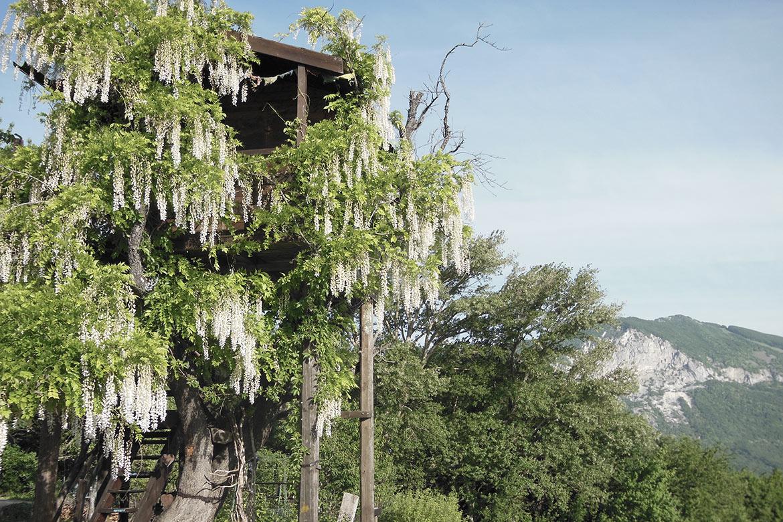 Camera sull'albero